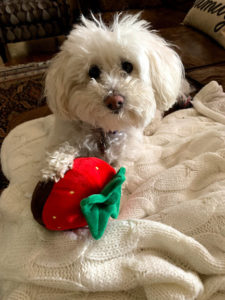 Winter, Get Healthy with Your Dog This Winter, Carley Creative Concepts